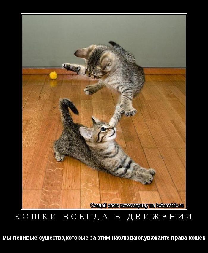 Котоматрица: кошки всегда в движении мы ленивые существа,которые за этим наблюдают.уважайте права кошек