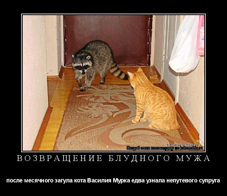Котоматрица: ВОЗВРАЩЕНИЕ БЛУДНОГО МУЖА после месячного загула кота Василия Мурка едва узнала непутевого супруга