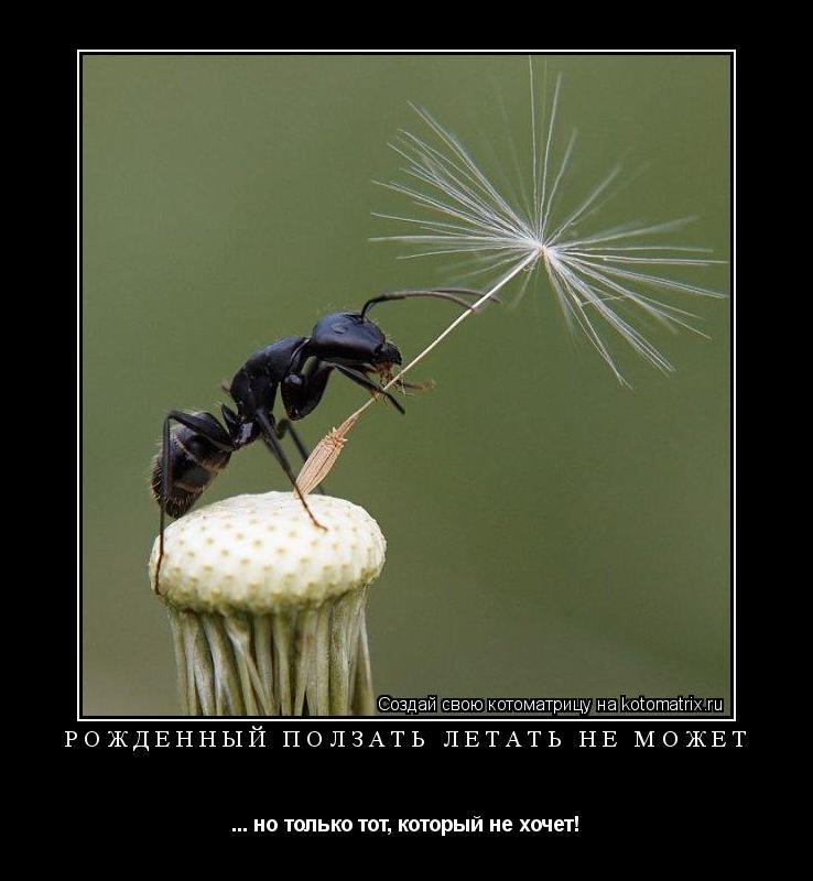 Котоматрица: Рождённый ползать летать не может ... но только тот, который не хочет!