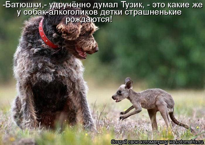 Котоматрица: -Батюшки,- удручённо думал Тузик, - это какие же  у собак-алкоголиков детки страшненькие  рождаются!