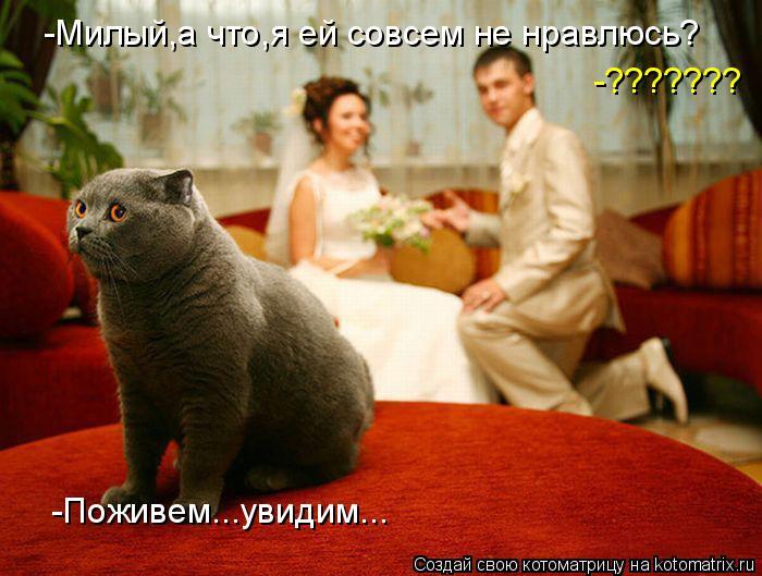 Котоматрица: -Милый,а что,я ей совсем не нравлюсь? -??????? -Поживем...увидим...