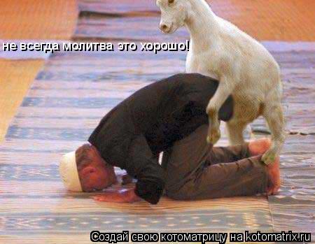 Котоматрица: не всегда молитва это хорошо!