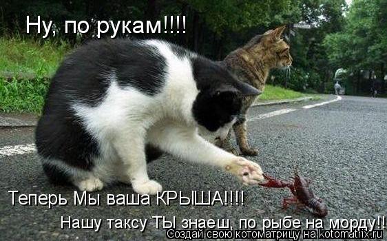 Котоматрица: Ну, по рукам!!!! Теперь Мы ваша КРЫША!!!! Нашу таксу ТЫ знаеш, по рыбе на морду!!