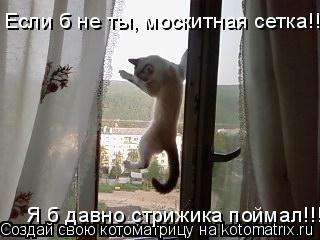 Котоматрица: Если б не ты, москитная сетка!!! Я б давно стрижика поймал!!!