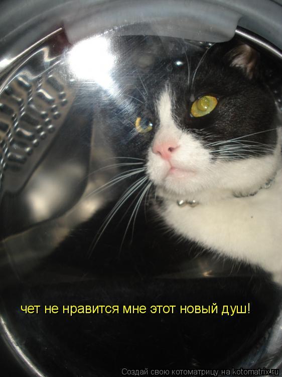 Котоматрица: чет не нравится мне этот новый душ!