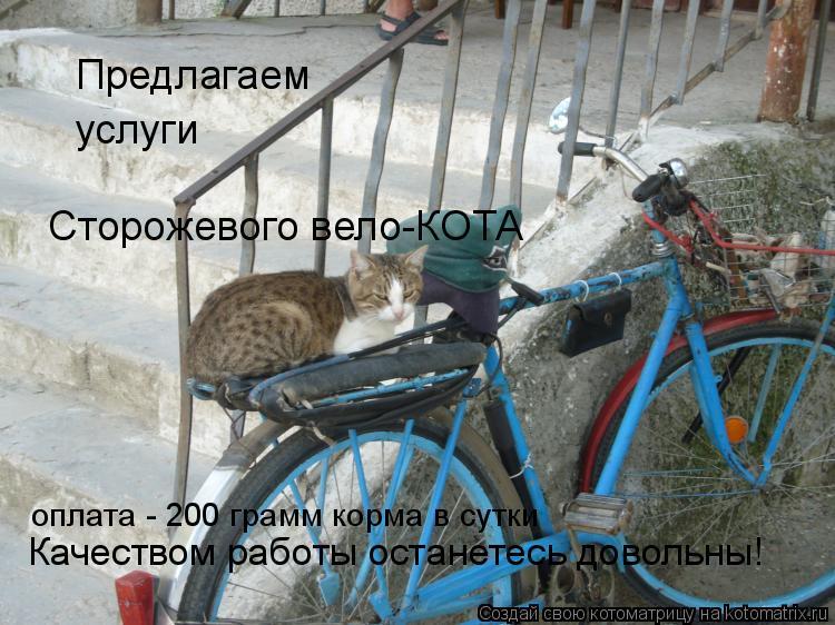 Котоматрица: Предлагаем услуги Сторожевого вело-КОТА оплата - 200 грамм корма в сутки Качеством работы останетесь довольны!
