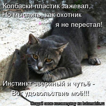Котоматрица: Колбаски пластик зажевал, Но мыслить, как охотник   я не перестал!  Инстинкт звериный и чутьё - Вот удовольствие моё!!!