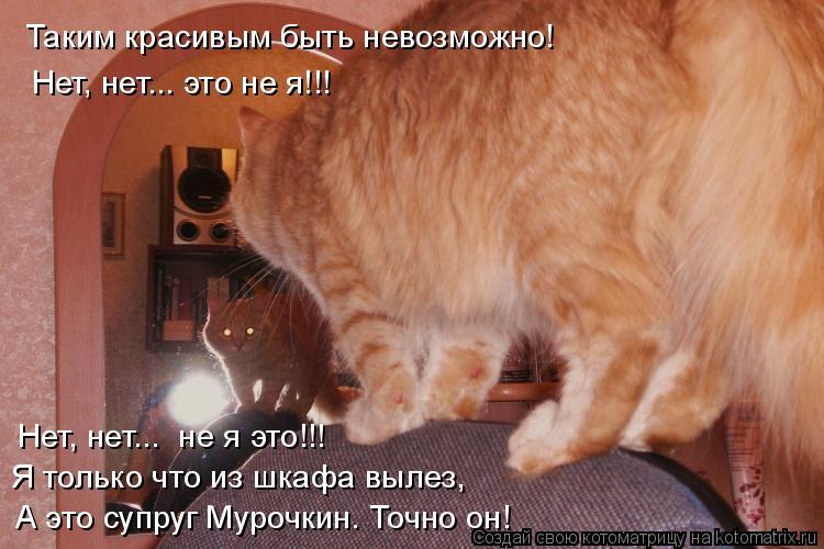 Котоматрица: Таким красивым быть невозможно! Нет, нет... это не я!!! Нет, нет...  не я это!!! Я только что из шкафа вылез, А это супруг Мурочкин. Точно он!