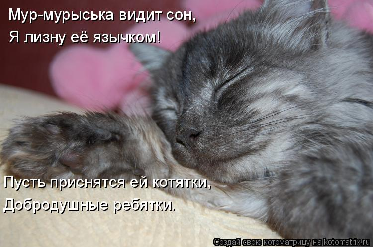 Котоматрица: Мур-мурыська видит сон, Я лизну её язычком! Пусть приснятся ей котятки, Добродушные ребятки.