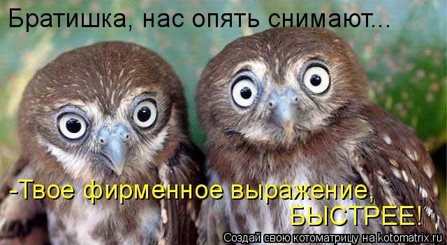 Котоматрица: Братишка, нас опять снимают... -Твое фирменное выражение, БЫСТРЕЕ!