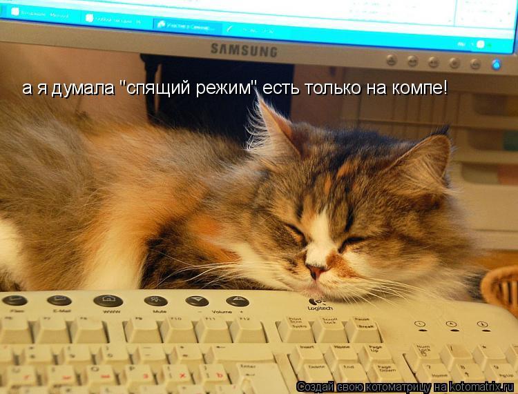 """Котоматрица: а я думала """"спящий режим"""" есть только на компе!"""