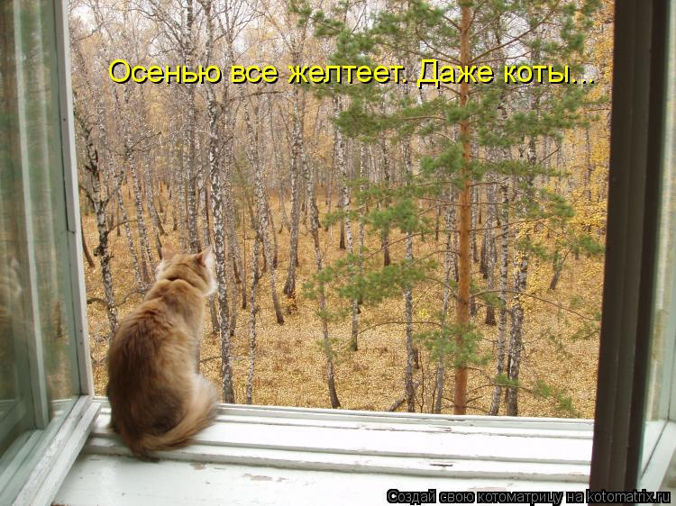 Котоматрица: Осенью все желтеет. Даже коты...