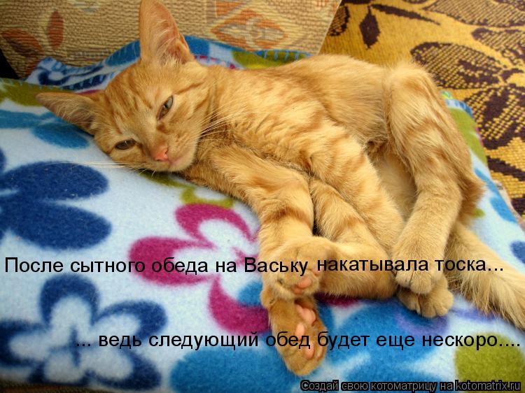 Котоматрица: После сытного обеда на Ваську  ... ведь следующий обед будет еще нескоро.... накатывала тоска...
