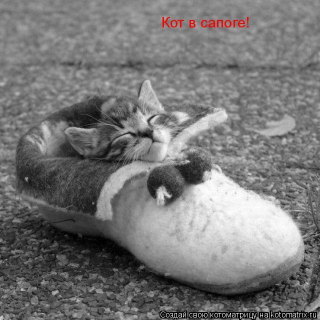 Котоматрица: Кот в сапоге!