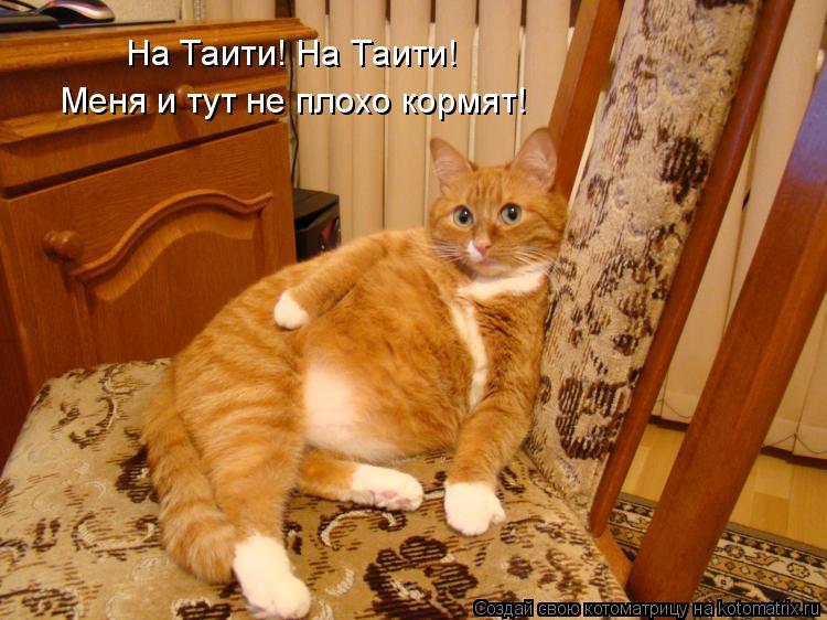 Котоматрица: На Таити! На Таити! Меня и тут не плохо кормят!