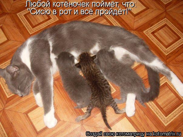 """Котоматрица: Любой котёночек поймёт, что: """"Сисю в рот и всё пройдёт!"""""""