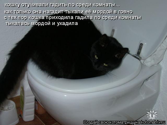 Котоматрица: кошку отучивали гадить по среди комнаты... как только она нагадит тыкали её мордой в говно  с тех пор кошка приходила гадила по среди комнаты