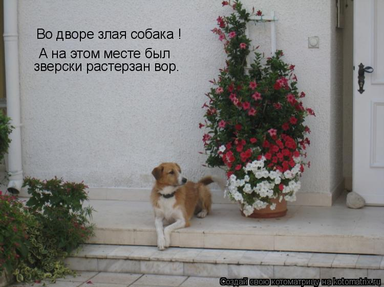 Котоматрица: Во дворе злая собака ! А на этом месте был зверски растерзан вор.