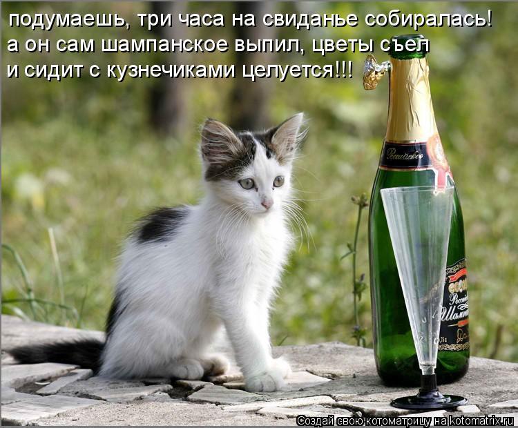 Котоматрица: подумаешь, три часа на свиданье собиралась! а он сам шампанское выпил, цветы съел и сидит с кузнечиками целуется!!!