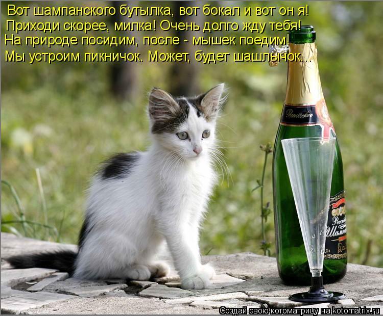 Котоматрица: Вот шампанского бутылка, вот бокал и вот он я! Приходи скорее, милка! Очень долго жду тебя! На природе посидим, после - мышек поедим! Мы устрои