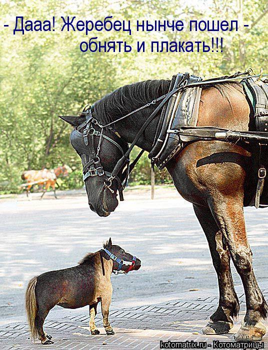 Самой миниатюрной лошадью в мире стал жеребец из американского штата...