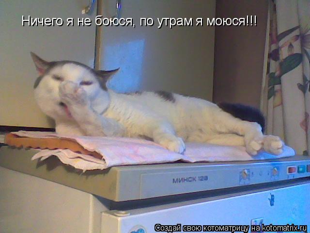 Котоматрица: Ничего я не боюся, по утрам я моюся!!!