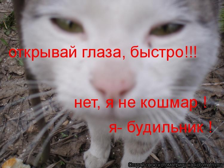 Котоматрица: открывай глаза, быстро!!! нет, я не кошмар ! я- будильник !