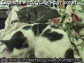 Котоматрица: Одеяла и подушки ждут котят...