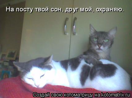 Котоматрица: На посту твой сон, друг мой, охраняю.
