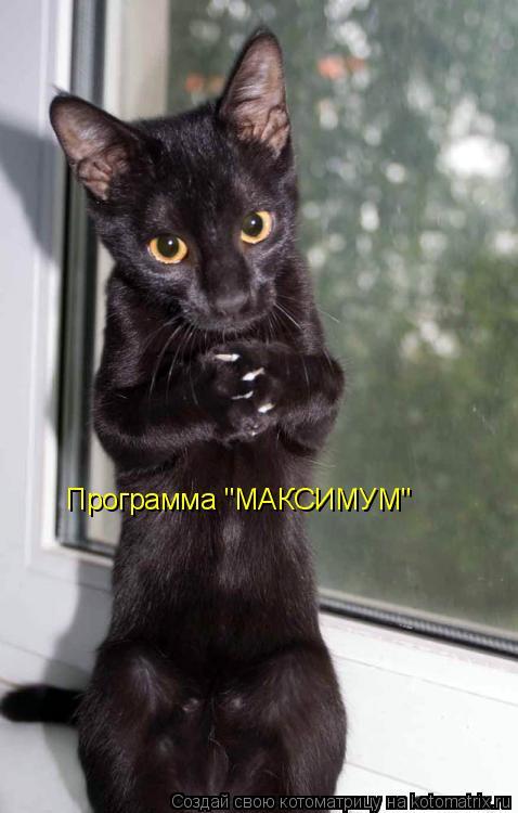 """Котоматрица: Программа """"МАКСИМУМ"""""""