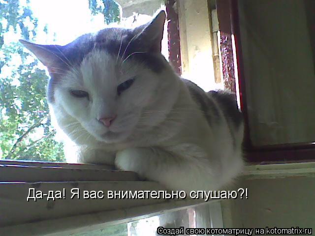 Котоматрица: Да-да! Я вас внимательно слушаю?!