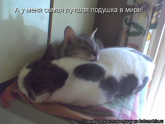 Котоматрица: А у меня самая лучшая подушка в мире!