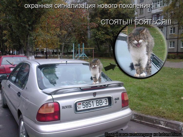Котоматрица: охранная сигнализация нового поколения: СТОЯТЬ!!! БОЯТЬСЯ!!!