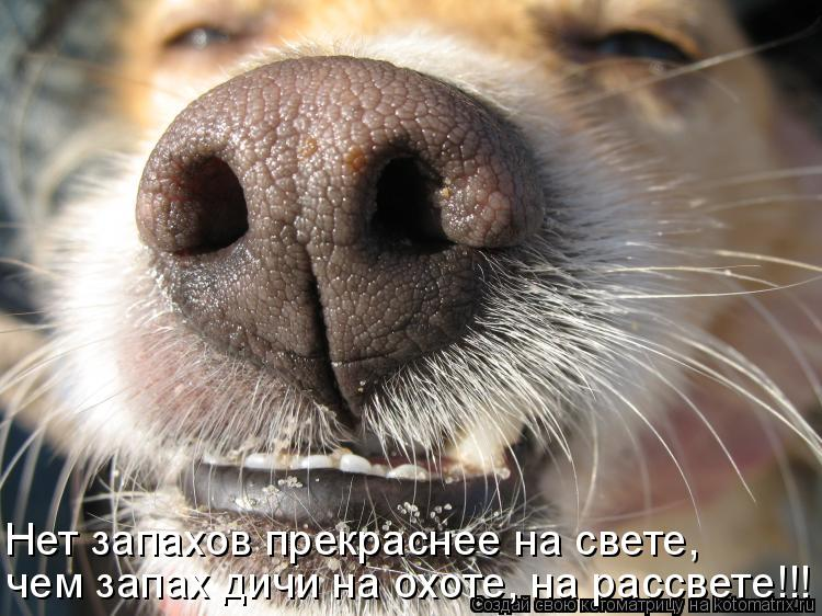 Котоматрица: Нет запахов прекраснее на свете, чем запах дичи на охоте, на рассвете!!!