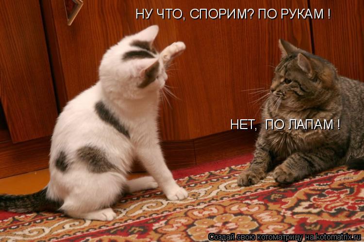 Котоматрица: НУ ЧТО, СПОРИМ? ПО РУКАМ ! НЕТ,  ПО ЛАПАМ !