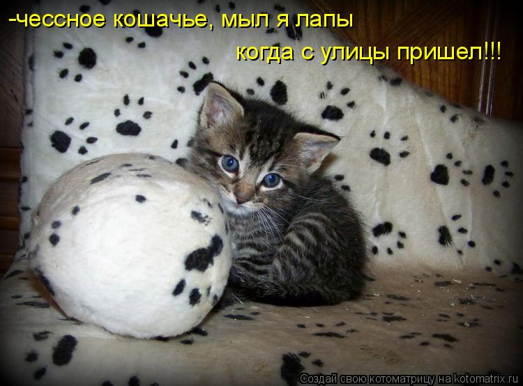 Котоматрица: -чессное кошачье, мыл я лапы когда с улицы пришел!!!