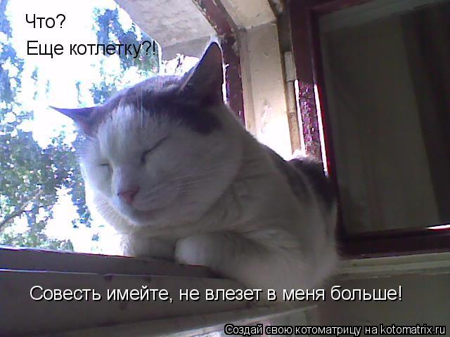 Котоматрица: Что? Еще котлетку?! Совесть имейте, не влезет в меня больше!