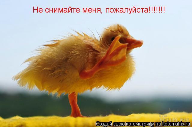 Котоматрица: Не снимайте меня, пожалуйста!!!!!!!