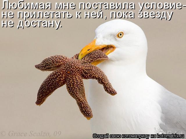 Котоматрица: Любимая мне поставила условие- не прилетать к ней, пока звезду не достану.