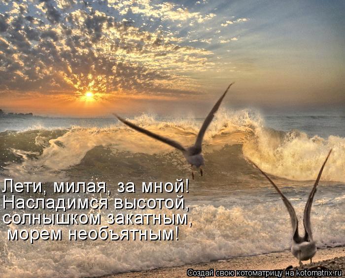 Котоматрица: Лети, милая, за мной! Насладимся высотой, солнышком закатным, морем необъятным!
