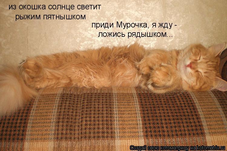 Котоматрица: из окошка солнце светит рыжим пятнышком приди Мурочка, я жду - ложись рядышком...