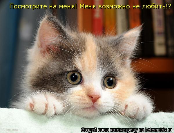 Котоматрица: Посмотрите на меня! Меня возможно не любить!?