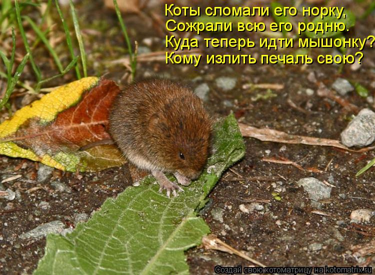 Котоматрица: Коты сломали его норку, Сожрали всю его родню. Куда теперь идти мышонку? Кому излить печаль свою?