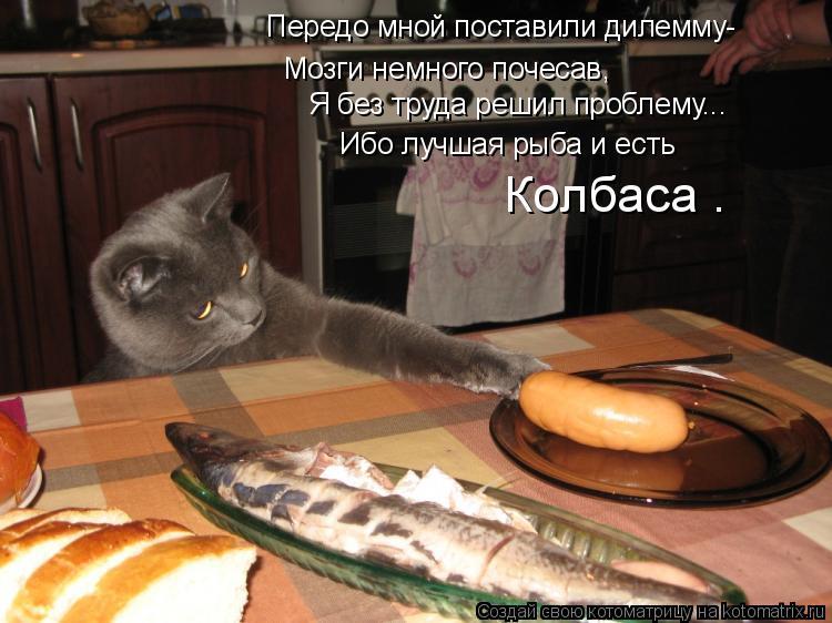 Котоматрица: Мозги немного почесав, Передо мной поставили дилемму- Я без труда решил проблему... Ибо лучшая рыба и есть  Колбаса .