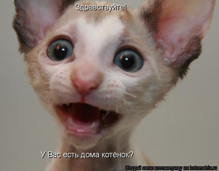 Котоматрица: Здравствуйте! У Вас есть дома котёнок?