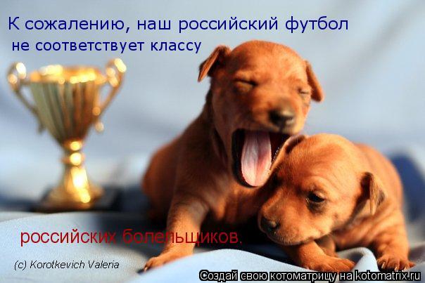 Котоматрица: К сожалению, наш российский футбол  не соответствует классу  российских болельщиков.