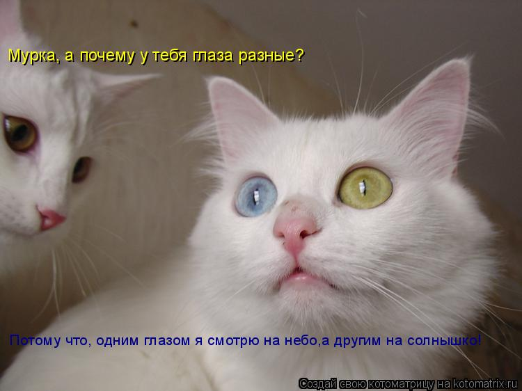 Котоматрица: Мурка, а почему у тебя глаза разные? Потому что, одним глазом я смотрю на небо,а другим на солнышко!