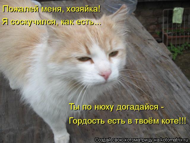 Котоматрица: Пожалей меня, хозяйка! Я соскучился, как есть... Ты по нюху догадайся - Гордость есть в твоём коте!!!