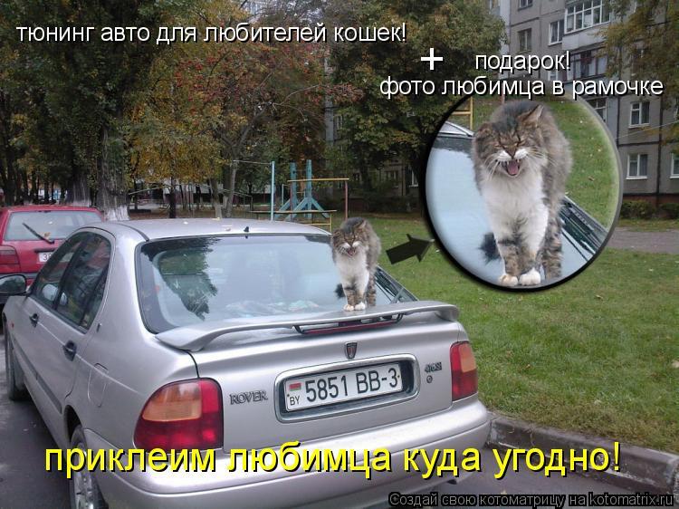 Котоматрица: тюнинг авто для любителей кошек! подарок! фото любимца в рамочке + приклеим любимца куда угодно!