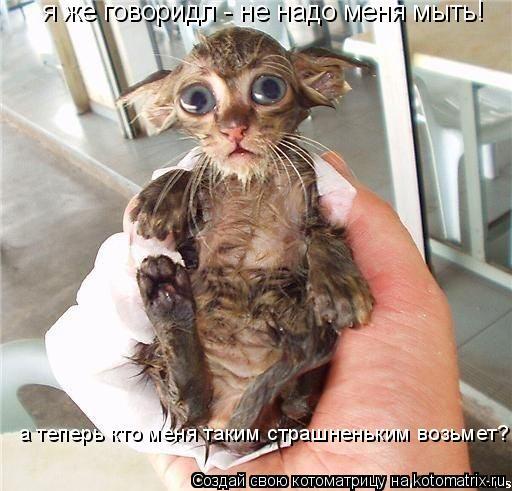 Котоматрица: я же говоридл - не надо меня мыть! а теперь кто меня таким страшненьким возьмет?